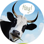 hay-for-signup
